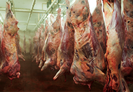 Food Processing & Cleaning